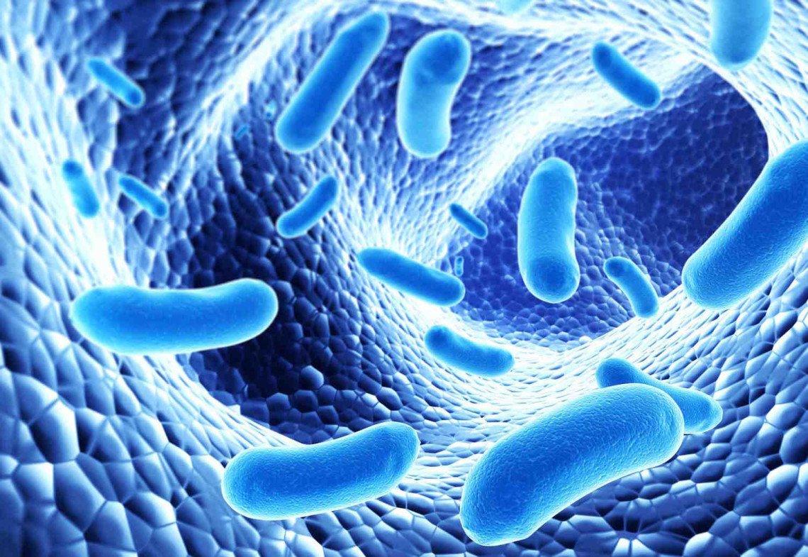 Сердечная недостаточность: разрушающие бактерии кишечника могут улучшить результаты